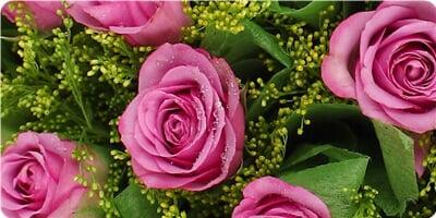 21枝紫玫瑰(绿色绵纸单包花头)