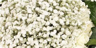 包 装 内衬网纱,英文旧报纸包装,拉菲草或丝结装饰,圆形花束 花 语 虽图片